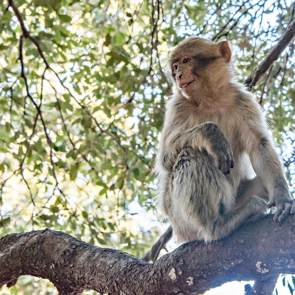 Cedar Forest azrou Morocco tour